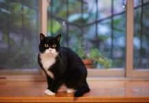 gatti su mobili nero e bianco
