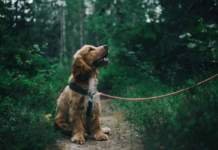 cane passeggio